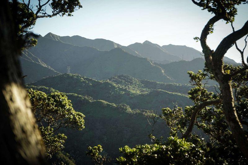 Qué es un bosque tropical