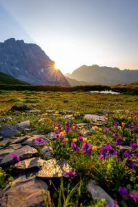Qué flora predomina en el clima de tundra