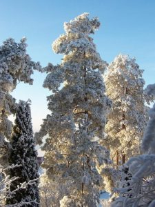 Qué flora tiene el clima hemiboreal