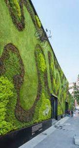 Qué plantas predominan en un jardín vertical