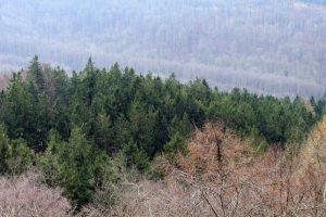 Qué temperatura tiene el bosque boreal
