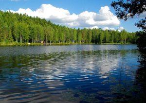 Qué temperatura tiene el bosque finlandés