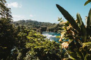 Qué temperatura tiene el bosque tropical