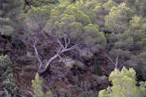 Qué temperatura tienen los bosques perennifolios