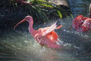 Qué tipo de fauna tiene la región Caribe