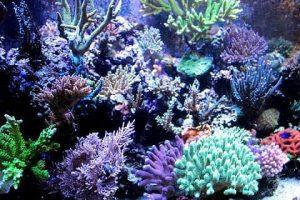 Qué tipo de flora predomina en el océano Pacífico