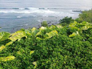 Qué tipo de flora tiene la región Caribe