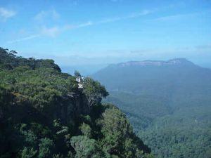 Selva subtropical de montaña
