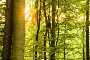 Qué tipo de flora tiene el bosque caducifolio