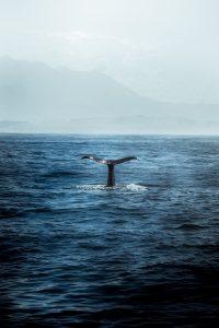 Qué tipo de fauna tiene las islas Canarias