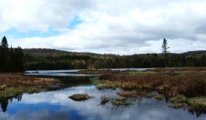 Cómo son las precipitaciones en el bosque boreal