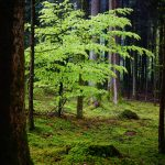 Flora y Fauna del Bosque Caducifolio: [Características y Ejemplos]