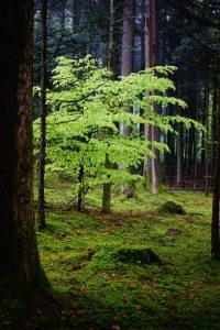 Qué características tiene la flora y fauna del bosque caducifolio