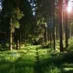 Bosque Caducifolio: [Características, Flora, Fauna y Temperatura]
