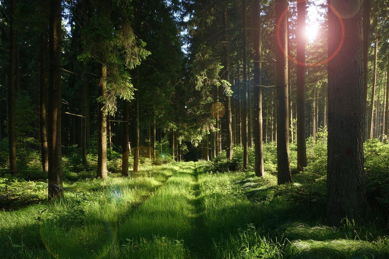 Qué es el bosque caducifolio