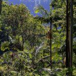 Bosque Subtropical: [Características, Flora, Fauna y Temperatura]