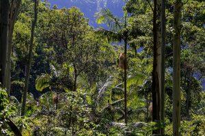 Qué es el bosque subtropical