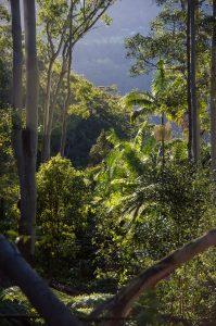 Qué características tiene el bosque subtropical