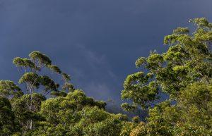Qué temperatura tiene el bosque subtropical
