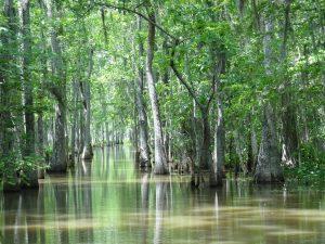 Cómo son las precipitaciones en el bosque tropical