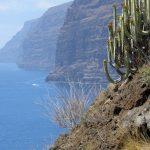 Flora y Fauna de las Islas Canarias: [Características y Ejemplos]
