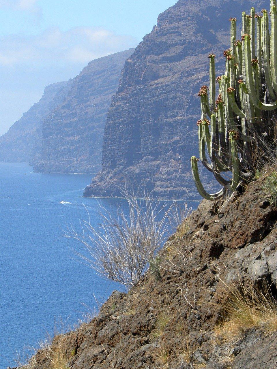 Qué características tiene la flora y fauna de las islas Canarias