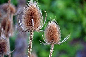 5 plantas y árboles característicos de las islas Canarias - Cardón