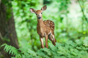Qué fauna predomina en los bosques primarios