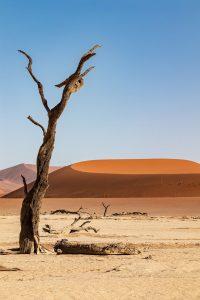 Qué características tiene la flora y fauna del desierto