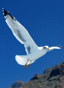 Qué fauna predomina en clima oceánico