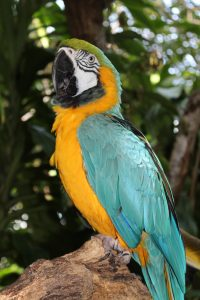 Qué fauna predomina en los bosques perennifolios - Guacamayos