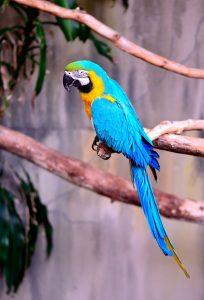 Qué fauna predomina en el bosque ecuatorial