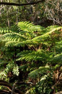 Qué flora predomina en el clima subtropical