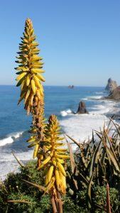 Qué tipo de flora tienelas islas Canarias