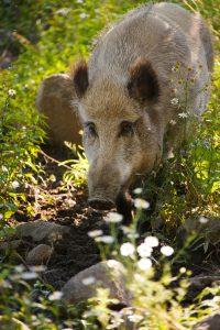 Qué fauna predomina en el bosque caducifolio