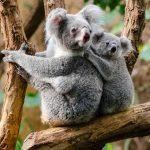 Flora y Fauna de Australia: [Características y Ejemplos]