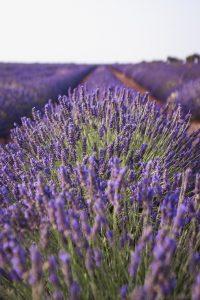 Qué tipo de flora tiene Francia