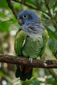 Qué fauna predomina en el bosque Atlántico