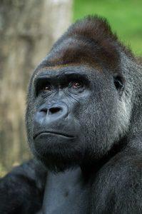 Qué fauna predomina en los bosques perennifolios