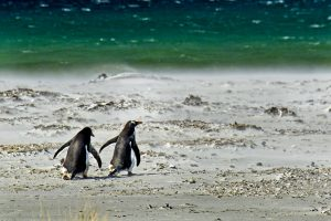 Qué temperatura tiene el océano Ártico