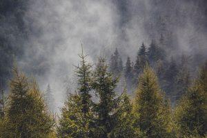Plantas y árboles más característicos del bosque mediterráneo - Pinos