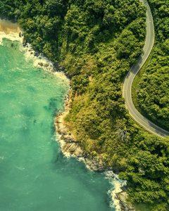 Selva subtropical costera