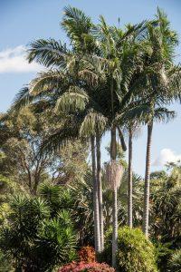 Pueden vivir los seres humanos en el clima subtropical
