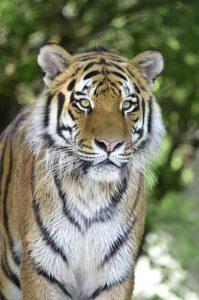 Qué fauna predomina en el bosque subtropical