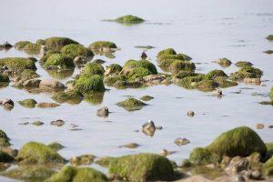 5 plantas características del océano Antártico - Algas terrestres