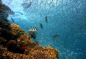 5 animales característicos del océano Atlántico - Arrecife de coral