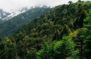 Cómo es el suelo de los bosques primarios
