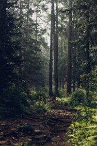 Cómo es el suelo del bosque esclerófilo