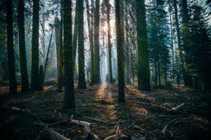 Cómo es el suelo del bosque ombrófilo