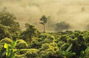 Cómo es el suelo en el bosque amazónico